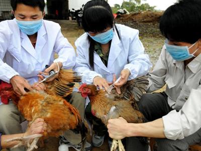 甘肅湖北發生高致病性禽流感疫情