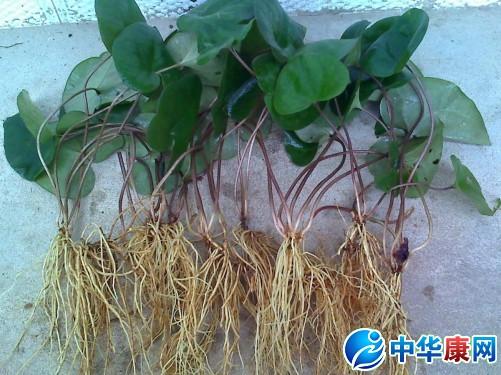 康江半球电饭煲电路图