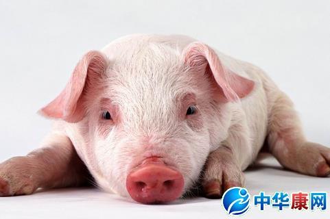 梦见被猪追的解梦 梦见被猪追是什么意思 中华康网